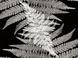 Ferns II Photographic Print by Jim Christensen