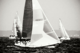 Race on the Chesapeake IV Photographic Print by Alan Hausenflock