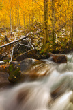 Cascade of Change Photographic Print by Mark Geistweite