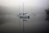 In the Fog Photographic Print by Tammy Putman