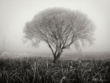 Tranquility III B&W Photographic Print by Vitaly Geyman