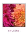 Imagine Flowers Photographic Print by Maureen Love