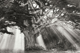 Moses Tree B&W Photographic Print by Vitaly Geyman