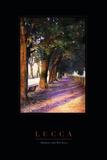 Shadow Trees II Photographic Print by John Warren