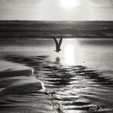 Sunset Bird Sq BW Photographic Print by Vitaly Geyman