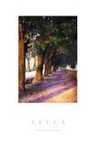 Shadow Trees III Photographic Print by John Warren