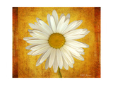 Daisy in Gold Giclee Print by Vitaly Geyman