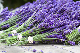 Lavender Harvest II Photographic Print by Dana Styber