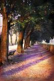 Shadow Trees I Photographic Print by John Warren