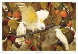 Persimmons & Cockatoos Posters par Jessie Arms Botke