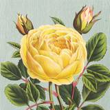 Yellow Rose Prints by Sarah Elizabeth Chilton