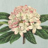 Rhododendron Posters by Sarah Elizabeth Chilton