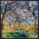 Spring in Giverny Framed Canvas Print by Claude Monet