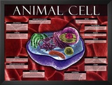 Animal Cell Prints