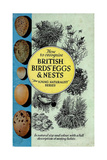 1950s UK British Birds Eggs and Nests Book Cover Giclee Print