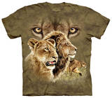 Find 10 Lions Shirts