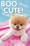 Boo The World's Cutest Dog Poolside Poster Posters