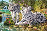 Hidden Images (White Tiger Clan) Art Print Poster Print