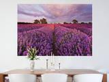 Lavendel Wallpaper Mural