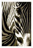 Zebra Head Posters by Courtney Lawhorn