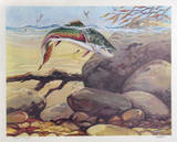 Rainbow Trout Collectable Print by Bill Elliot