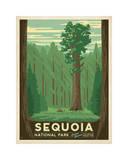 Sequoia National Park Lámina giclée por Anderson Design Group