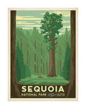 Parc national de Sequoia, Californie Posters par  Anderson Design Group