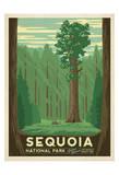 Sequoia National Park Plakater af Anderson Design Group