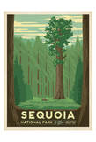 Parco Nazionale Sequoia, California Stampe di  Anderson Design Group
