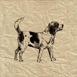 Beagle Print by Sabine Berg