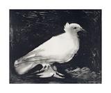 Dove, 1949 Posters par Pablo Picasso