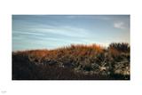 Night Bush Photographic Print by Nigel Barker