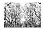 Central Park Winter II Photographic Print by Nigel Barker