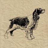 Spaniel Prints by Sabine Berg