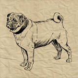 Pug Prints by Sabine Berg