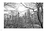 Central Park Winter IV Photographic Print by Nigel Barker