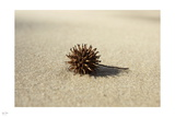Sand and Seed Photographic Print by Nigel Barker