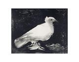 Dove, 1949 Poster von Pablo Picasso