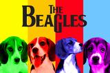 Beagles Kunstdrucke