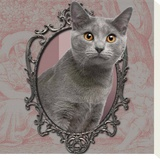 Chartreux Stretched Canvas Print by Patrick Durand