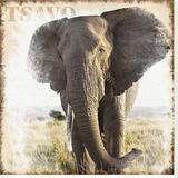 Elephant Reproducción en lienzo de la lámina por Patrick Durand