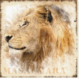 Lion Stretched Canvas Print by Patrick Durand
