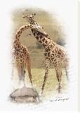 Baiser de la Girafe Stretched Canvas Print by Patrick Durand