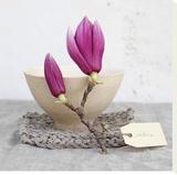 Magnolia bol blanc maille Leinwand von Amelie Vuillon