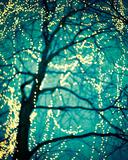 Soft Glow I Giclee Print by Irene Suchocki