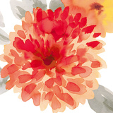 Peach Flower I Giclee Print by Sandra Jacobs
