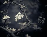 Midnight Garden I Lámina giclée por Irene Suchocki