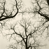 Tree Study V Giclee Print by Michael Kahn