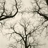 Tree Study V Gicleetryck av Michael Kahn