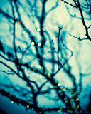 Soft Glow II Giclee Print by Irene Suchocki